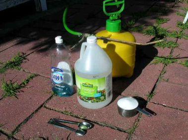 homemade weed killer